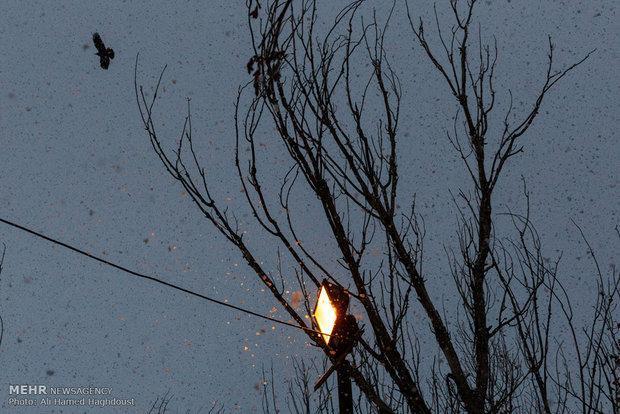 موج دوم سرما و بارندگی ها استان اردبیل را فرا گرفت