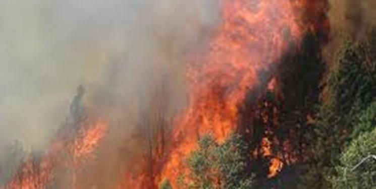 برزیل: آمریکا برای مهار آتش سوزی در جنگل های آمازون یاری خاصی نمی کند