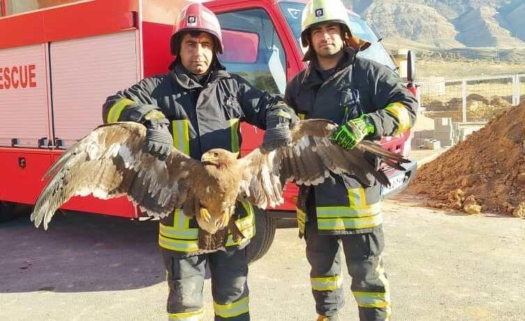 خبرنگاران آتش نشانان عقاب زخمی را در کوه های کرمان نجات دادند