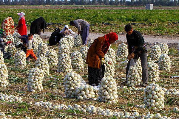 2 هزار و 750 کشاورز خدمات صندوق بیمه اجتماعی دریافت کردند