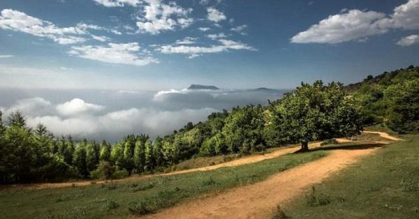 مغایرت آسفالت جهت جنگل ابر ثبت جهانی